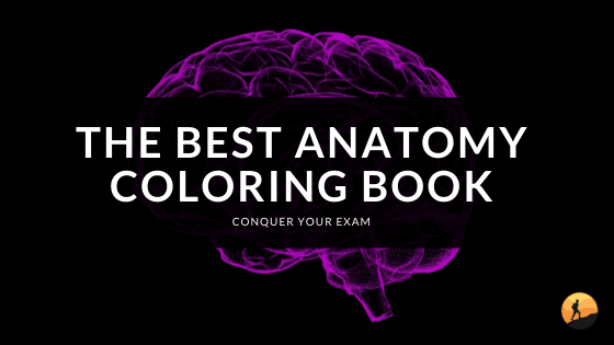 The Best Anatomy Coloring Book