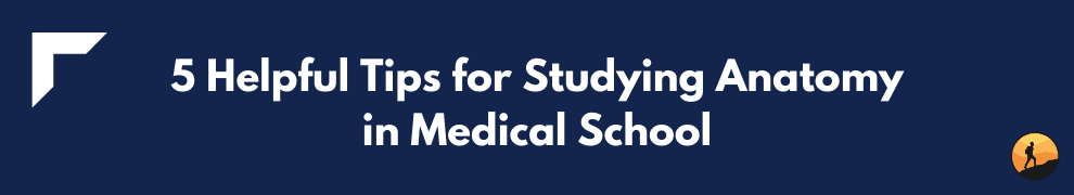 5 Helpful Tips for Studying Anatomy in Medical School